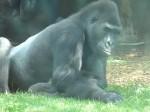 2014_08_05 Zoo Muenster 2